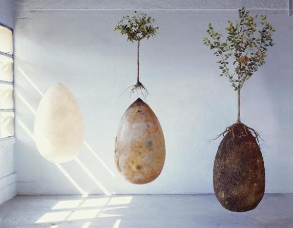 O nouă metodă de înmormântare prin care cei dragi devin copaci