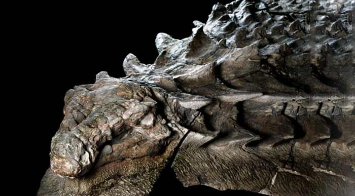 Cea mai bine conservată fosilă de dinozaur
