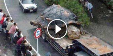 cele mai mari animale din lume