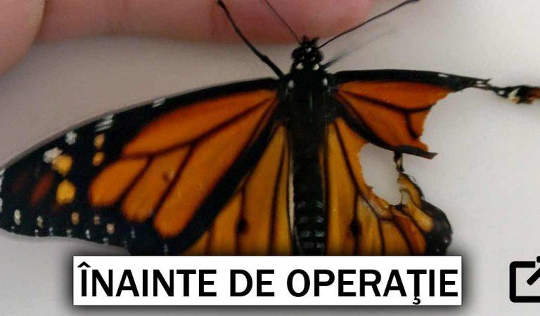 O femeie găseşte un fluture cu aripa ruptă şi decide să-l opereze pentru a-i salva viaţa