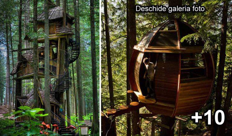 13 case construite în copaci, care parcă sunt rupte din altă lume
