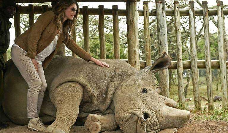 Ultimul rinocer alb nordic mascul de pe Pământ a murit la vârsta de 45 de ani
