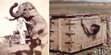 Fotografiile vechi au ceva aparte. Au o poveste în spate, iar asta le face fascinante. Să vedem o colecţie cu fotografii ciudate din trecut:
