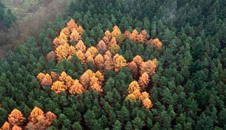 Descoperire ciudată într-o pădure din Germania, făcută după 60 de ani