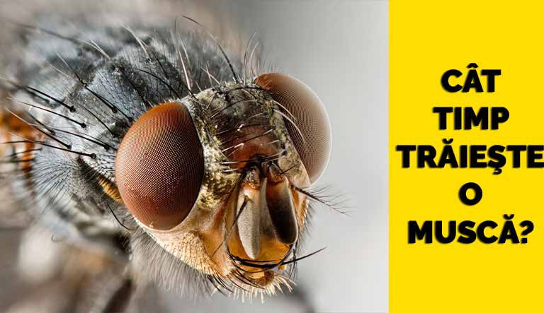 Cât timp trăieşte o muscă?
