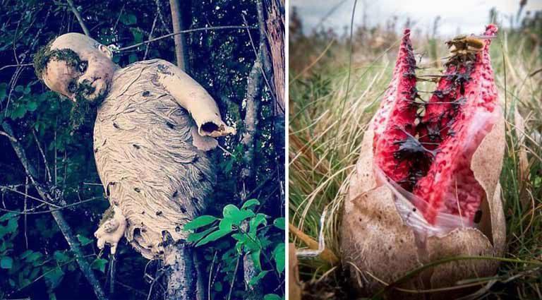 10 fotografii care ne arată că natura este mereu pregătită să ne sperie