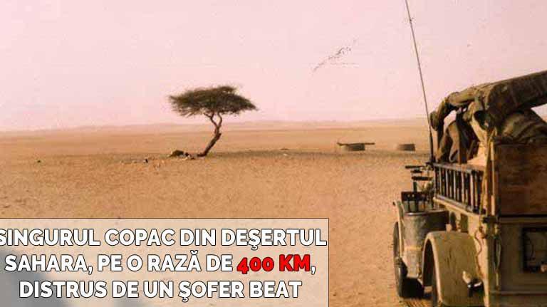 Arborele din Tenere | Singurul copac din deşert, pe o rază de 400 km, rupt de un şofer beat