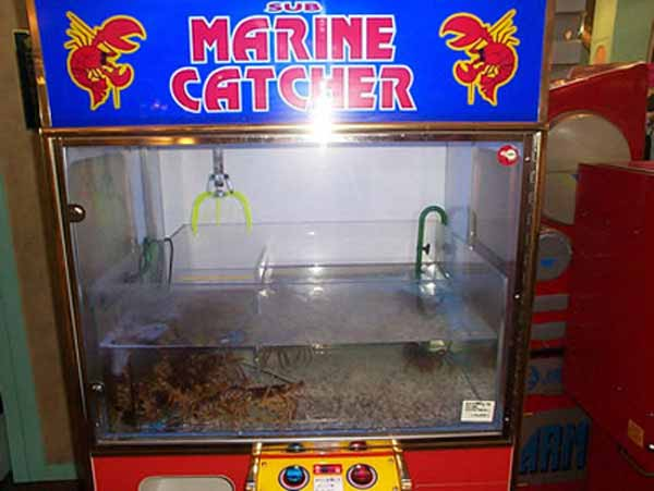 automate vending homari
