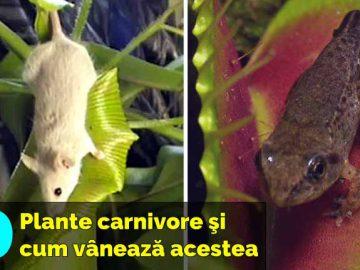 plante carnivore top 10