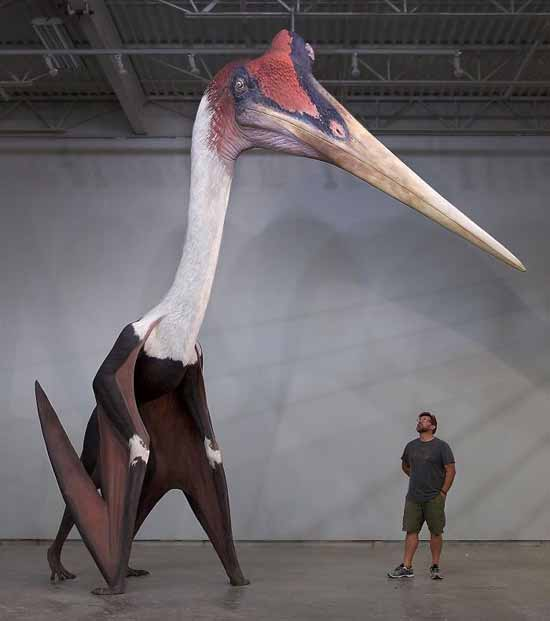 Cea mai mare zburătoare din istorie