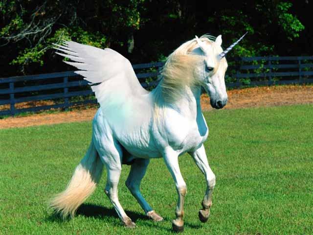 unicorn in biblie