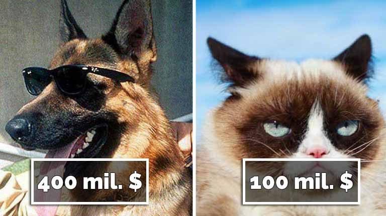 Top 10 cele mai bogate animale din lume şi ce averi au