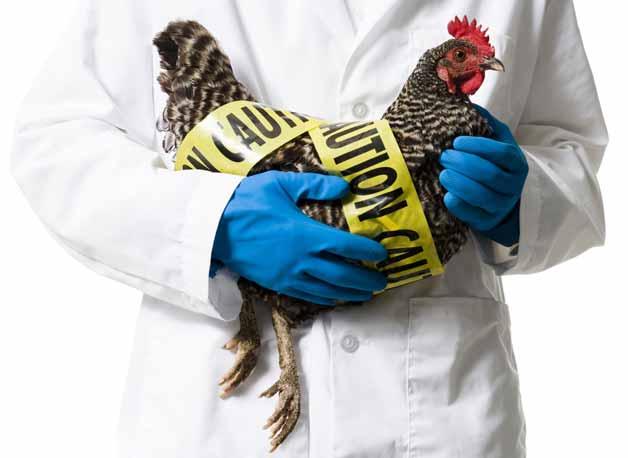 profetie gripa aviara