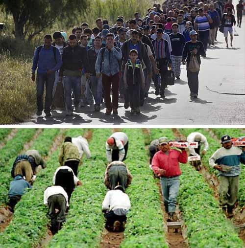imigranti la munca