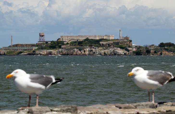 pasari inchisoarea alcatraz