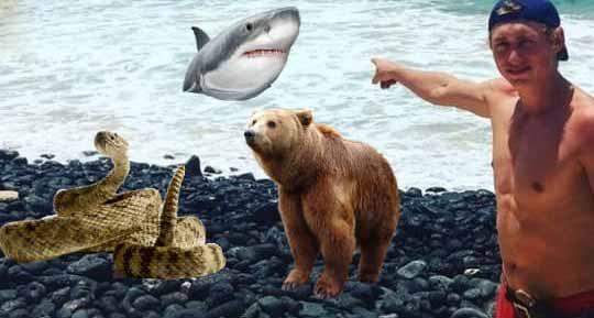 atacat de urs si de rechin