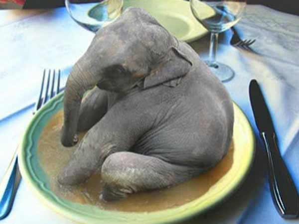 carne de elefant