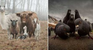 imagini amuzante animale