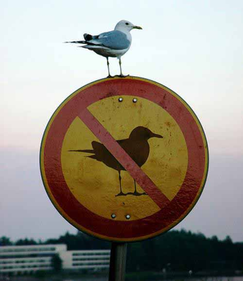 pasare pe semn cu pasare interzisa