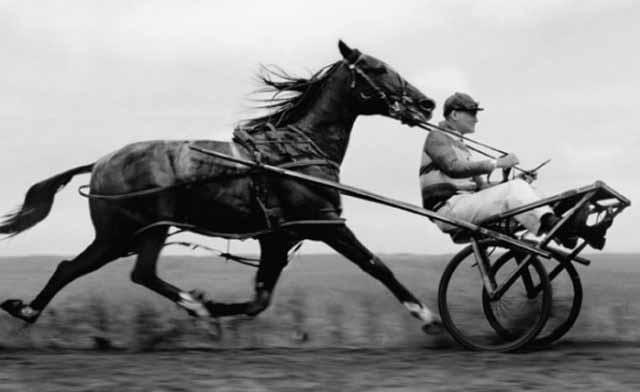 cati cai putere are un cal