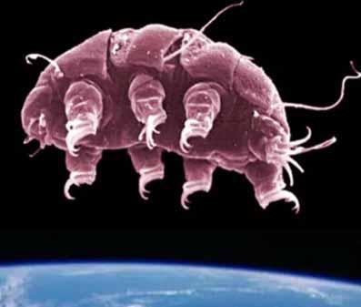 tardigrade sau urs de apa