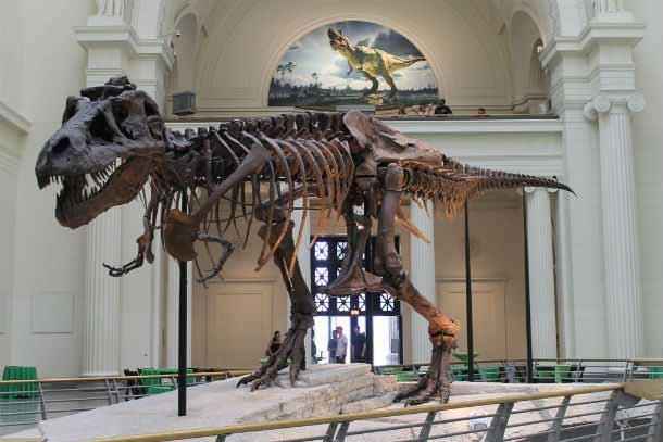 dinozaur furat