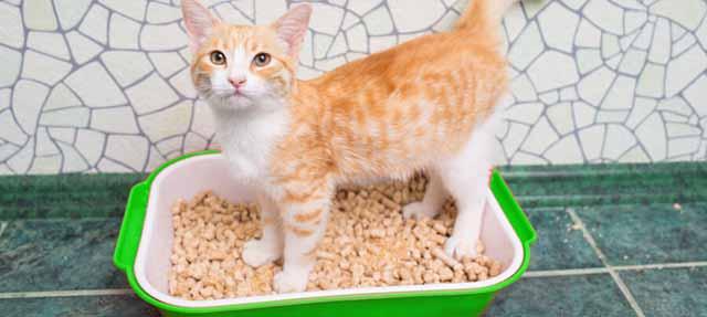 ce contine litiera pentru pisici