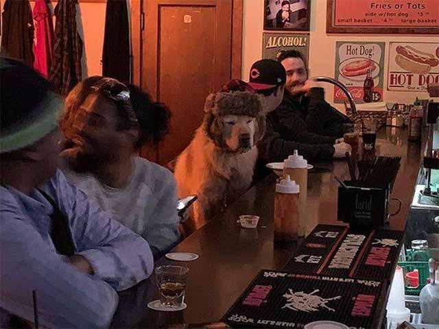caine care sta la bar