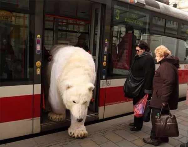 urs in autobuz