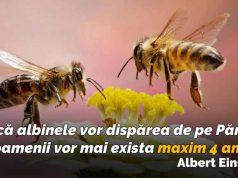 ce se întâmplă dacă dispar albinele
