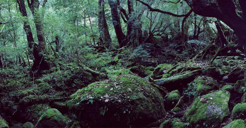 pădurea sinucigaşilor