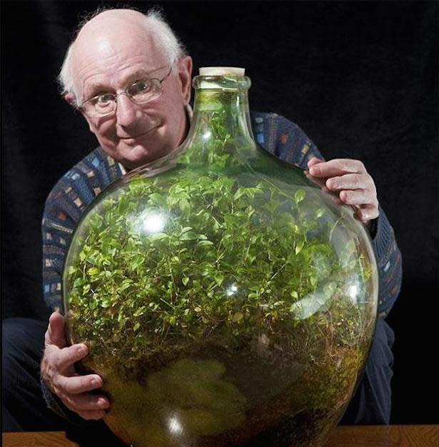 planta care creşte într-o sticlă