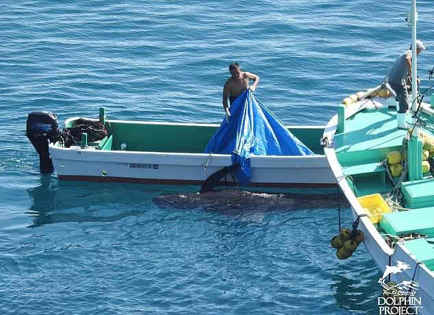 carne de delfin
