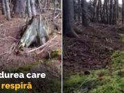 pădurea care respiră