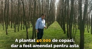 plantat 40.000 de copaci