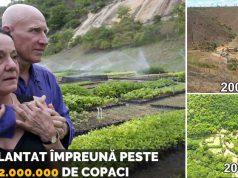 plantat două milioane de copaci