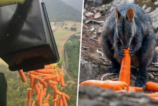 morcovi şi cartofi