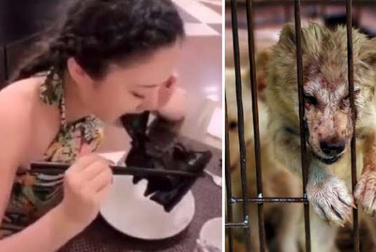 pieţele de animale din china