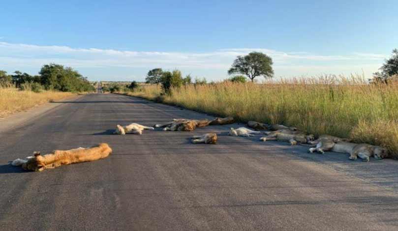 dorm pe mijlocul drumului