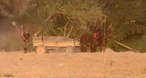 cai bătuţi