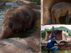 cel mai singuratic elefant