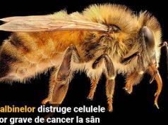 veninul albinelor